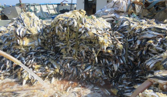 Fish farm operators inspected at least three times a week, ERA says