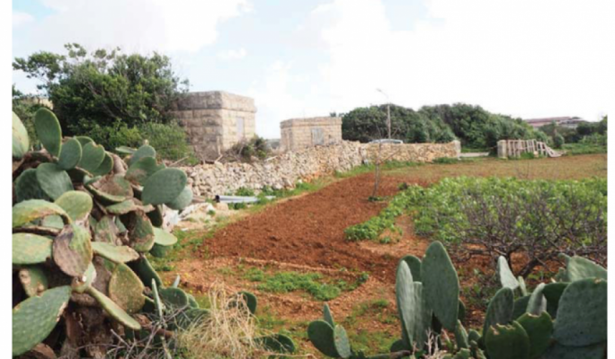 Dingli farmland lost to sports track to 'promote health and well-being'